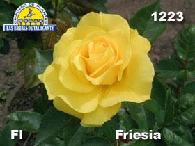 Rosa Fl 1223 Friesia det2 copia.jpg