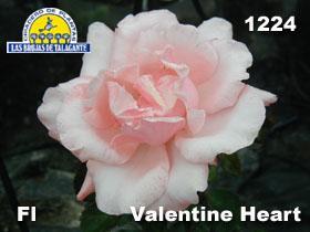 Rosa Fl 1224 Valentine Heart det12 copia.jpg
