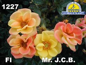 Rosa Fl 1227 Mr.J.C.B det1flores copia.jpg