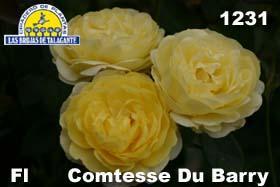 Rosa Fl 1231 Comtesse Du Barry 938 copia.jpg