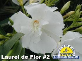 Laurel de Flor  2 Blan copia.jpg
